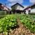Anica Banović: Samoizolacija me podstakla da posadim svoju baštu
