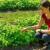 U svom vrtu ima razno bilje - od ljekovitog do godži bobica i sve ih prirodnim preparatima održava