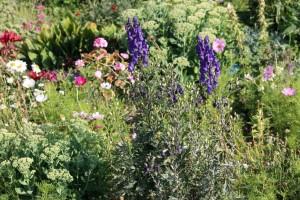 Ukrasi vrta koji mogu biti i otrovni - imate li neki od njih?