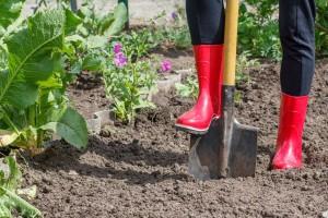 5 savjeta kako da poboljšate svoj vrt