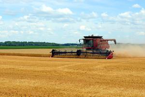 Ruski izvoz žitarica blizu rekordnih 50 miliona tona