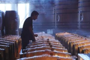 Natječaj za mjeru Ulaganje u vinarije i marketing vina otvoren do 30. travnja