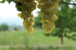 52. Sajam i izložba zagorskih vina, Bedekovčina 2019