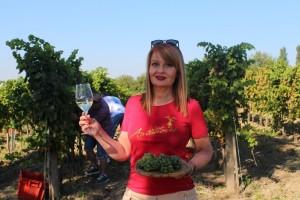Rujansko vrijeme obećava dobre prinose u nasadima vinarije Antunović