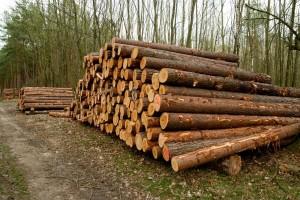 Manje proizvedeno i prodano šumskih sortimenata - novembar neće ublažiti podbačaj?