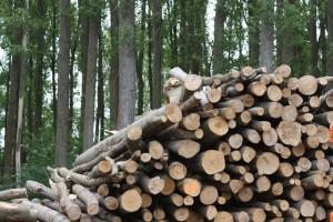 100 tisuća tona drvne sječke i ogrjevnog drva za planiranje proizvodnje u 2020.