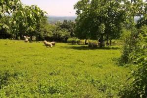 Više od 600 zahteva za podsticajna sredstva u poljoprivredi