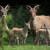 Novo otkriće: Sterilnim životinjama uspeli da vrate plodnost