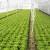 Dupla folija i naduvavanje vazduha između najlona za zimsku zaštitu zelene salate