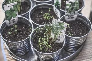 Začinsko bilje koje bi trebalo da posadite