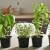 7 višegodišnjih biljaka koje možete sada posaditi