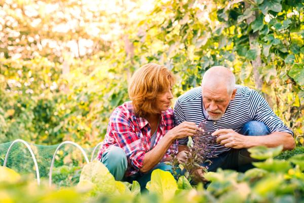 Začinsko bilje i povrće - dobri susjedi u bašči