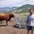 Velimir Platiša: Uzgoj goveda na krškim pašnjacima siguran je posao