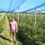 Bojan Miljanić gradski život zamenio uzgojem borovnice