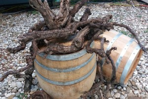 100. godina Zavoda za vinogradarstvo i vinarstvo: Čuvari banke gena autohtonih sorti