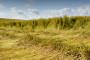 Završena žetva lana na poljima Bosanskog Petrovca