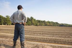 Razvojna banka FBiH odobrila 100 miliona KM za razvoj poljoprivrede
