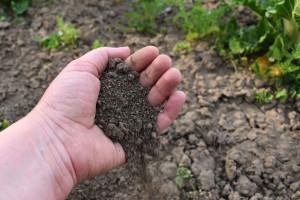 Bakterije u tlu zadužene za dobro raspoloženje: Kopajte, sadite i rješite se loših misli
