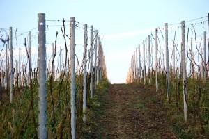 Proljetna obrada zemljišta u vinogradu
