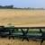 Pšenica iz Srbije do kraja godine u Egiptu i Kini?