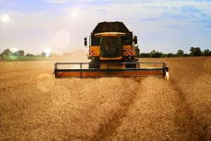 Pšenica najprodavanija na berzi