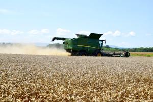 Gde je ovršeno najviše pšenice i spelte?