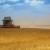 Žetva pšenice u Rusiji bliži se kraju, prinosi već premašili prošlogodišnje