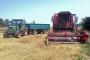 Kiša umanjila kvalitetu pšenice u cijeloj Europi