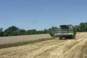 Srednji Banat: Žetva pšenice završena - čeka se otkupna cena