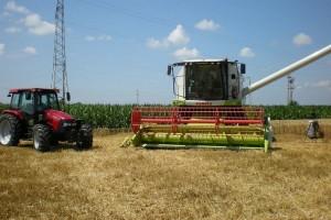 Pšenica malo poranila - prosečan prinos oko 6,5 t/ha