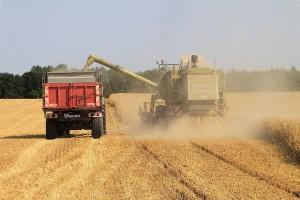 Izvozne cene ruske pšenice nastavile prošlonedeljni pad