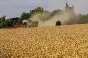 Rusija izvezla gotovo 50 miliona tona žitarica