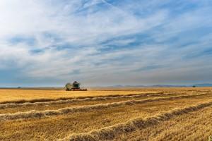 Veliki izvoz rezultovao smanjenjem ruskih zaliha pšenice za 25% u odnosu na 2017.