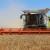 Žetva pšenice u Vojvodini se privodi kraju - cena 20,3 dinara za kilogram