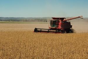 Rekordan ruski izvoz soje nastavljen zahvaljujući Kini
