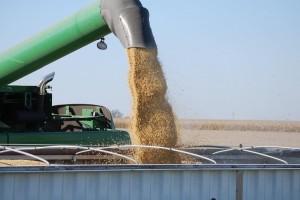 Rusija u Kinu izvezla rekordnu količinu soje