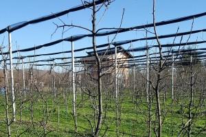 Zimska rezidba krušaka: Manje grana - veća snaga voćke