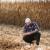 Više od pola svijeta zavisi od tri žitarice - stižu nove vrste za prehranu stanovništva?