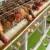 Nedozvoljene količine insekticida u 742 uzoraka jaja i mesa živine