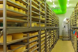 Miješani sir u orahovom lišću u kategoriji najboljih sireva na svijetu!