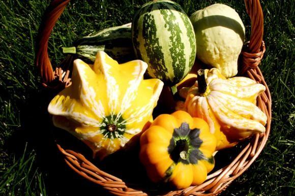 Ekološka hrana sadrži više hranjivih sastojaka