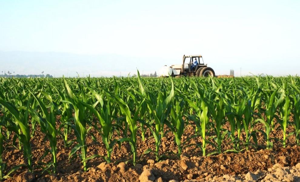 Izaberite najselektivniji herbicid za kukuruz!