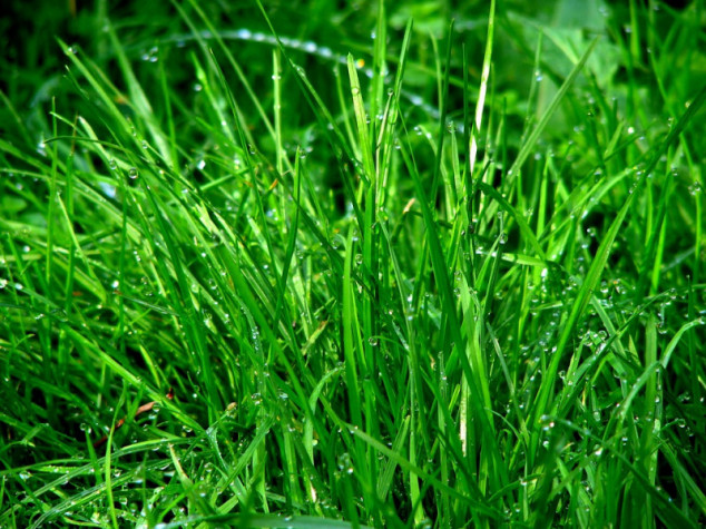 Rujan - idealan mjesec za jesensku sjetvu trave
