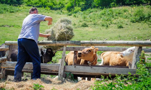 Turci zbog politike ne žele nizozemske krave