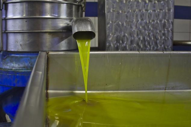Kilogram prerade maslina uljare naplaćuju 1,5kn