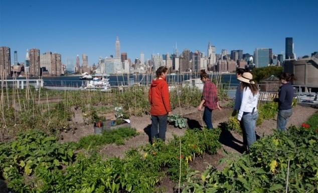 Urbane farme u velikim gradovima