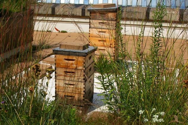 Urbano pčelarstvo kao hobi