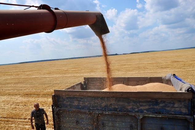 Egipatska potražnja diže cijenu ruske pšenice
