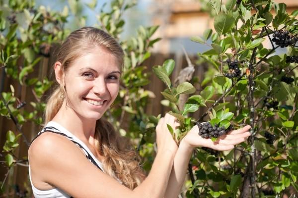 Aronija - kultura idealna za eko uzgoj!