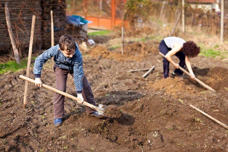 Ekološki uzgoj šparoge za početnike